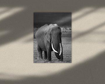 Elefant in Amboseli, Kenia von Marije Rademaker
