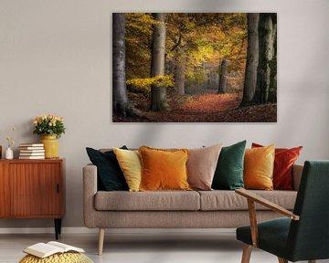 Herfst in Nederland van Alex Riemslag