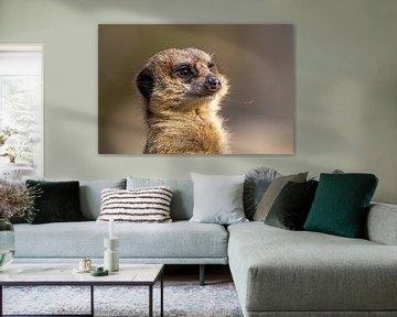 Meerkat van Dennis Eckert