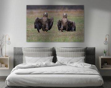 The Eagle Army (Zeearenden) van Harry Eggens