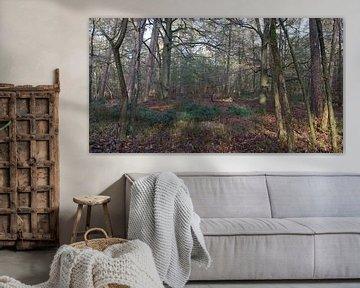 Un panorama forestier sur Gerard de Zwaan