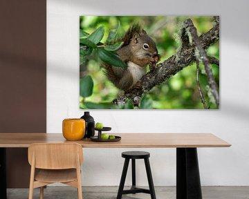 Rode eekhoorn (Tamiasciurus hudsonicus) van Alexander Ludwig