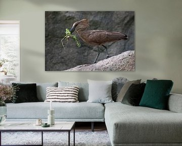 Hamerkop : Tierpark Blijdorp von Loek Lobel