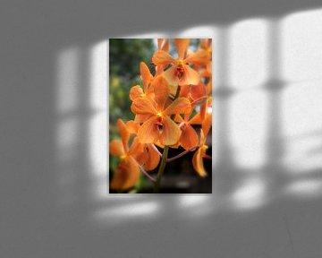 Palmen-Orchidee -Spathoglottis plicata von jacky weckx