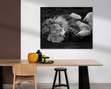 Löwe entspannen von Patrick van Bakkum