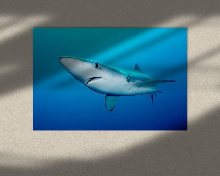 Sfeerimpressie: Blauwe haai in Zuid-Afrikaanse wateren van Filip Staes
