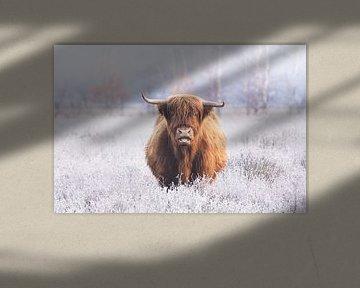 Schotse Hooglander omringt door bevroren heide van Maarten Oerlemans