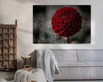 Dahlia rote Blume von Marijke Keijser
