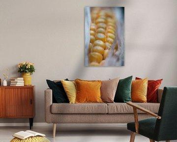 close up van een maiskolf van Evelien Brouwer