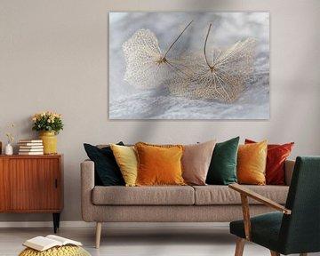 Verlorener Ruhm von zwei Blütenblättern einer Hortensie von Jefra Creations