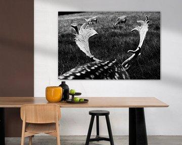 Zwart-wit hertengewei in Le Parc à Gibier de La Roche van Paul van Putten