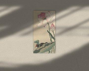 Gallinule met lotusbloemen van Ohara Koson