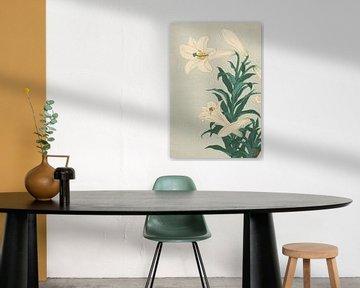 Lelies van Ohara Koson