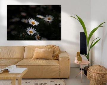 Weiße Blumen von Petro Luft