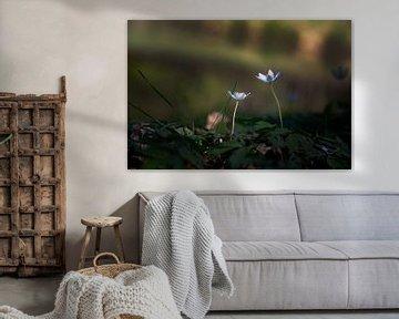 Kleine weiße Blumen im Wald von Petro Luft