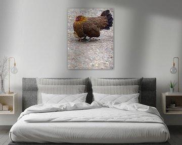 Mère poule avec son poussin sur Roland de Zeeuw fotografie