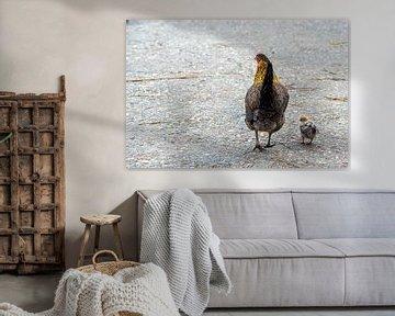 Glucke mit Küken von Roland de Zeeuw fotografie