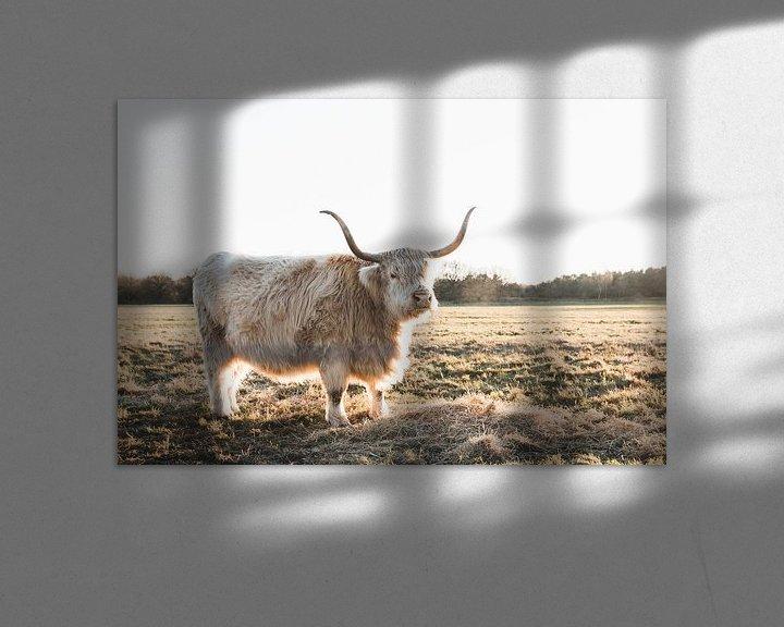 Sfeerimpressie: Schotse Hooglander in avondzon van Rob Veldman