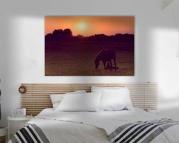 Paard en veulen met zonsondergang van Photography by Karim