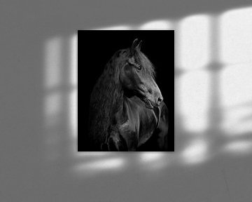 Rixtes de chevaux frisons sur By Foto Joukje