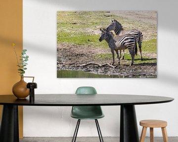 Zebra : Koninklijke Burgers' Zoo van Loek Lobel