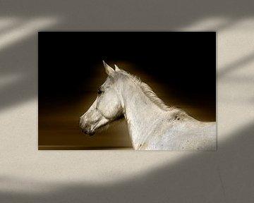 Das weiße Pferd von RuxiQue