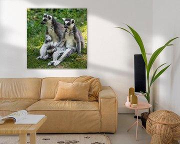 Ringelschwanzlemur : Safaripark Beekse Bergen von Loek Lobel