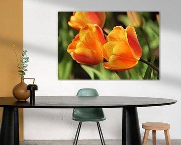 Orangefarbene Tulpen von Geert Heldens