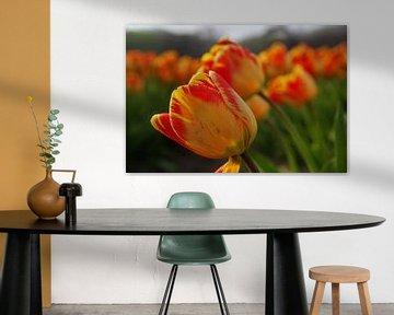 Orangerote Tulpen von Geert Heldens