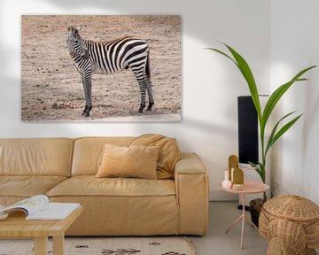 Grévy Zebra en de Grant Zebra : Safaripark Beekse bergen van Loek Lobel