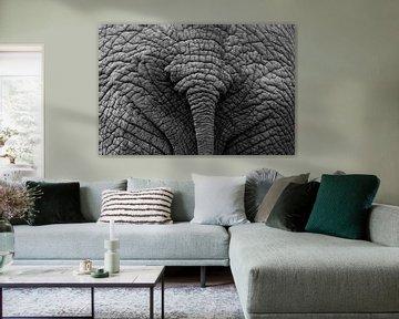 Elefantenhintern von Max ter Burg Fotografie