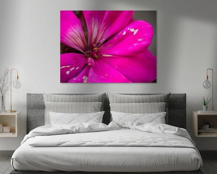Beispiel: Rosa Blume von Martijn Tilroe