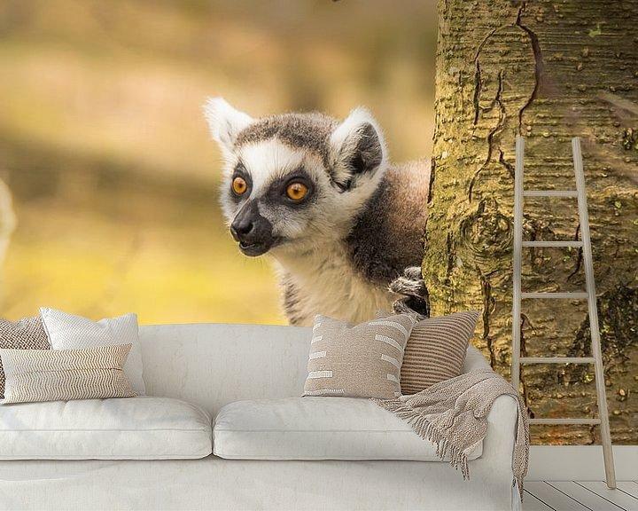 Beispiel fototapete: ein Ringelschwanz-Lemur von Martijn Tilroe