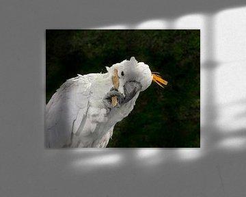 Kakadu : Papageien von Loek Lobel