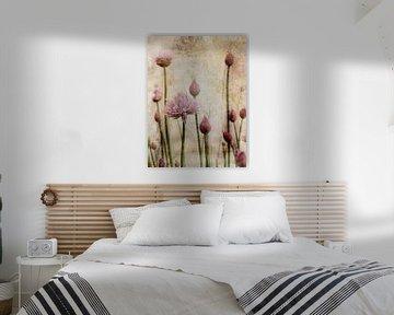Schnittlauchblüten und Knospen von Claudia Gründler