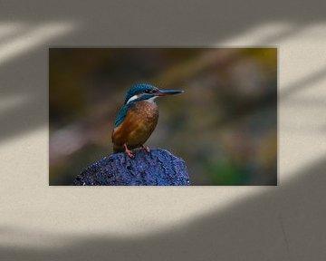 Der Fischer von Miranda Rijnen Fotografie