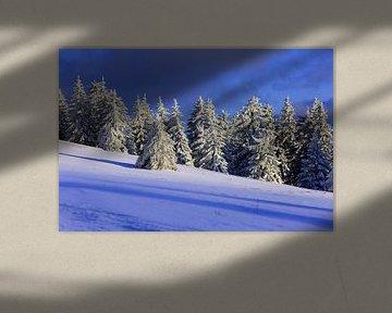 Schneebäume auf dem Feldberg von Patrick Lohmüller