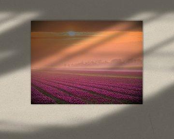 Des tulipes dans le brouillard