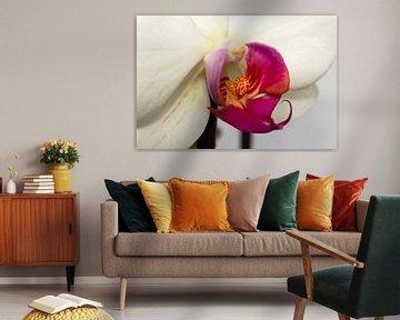 Orchidee von Gert-Jan Kamans