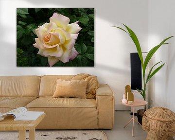 Rose - Morgenfrische. Gelbe Rose auf grünem Blatthintergrund