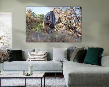 Maultierhirsche weiden im Arches-Nationalpark, USA von Maarten Oerlemans