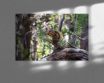 Eekhoorn in Yellow Stone nationaal park van Maarten Oerlemans