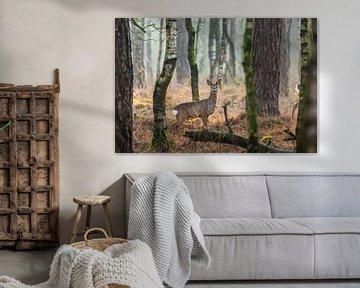 Hirsche in wachen Haltungen in den niederländischen Wäldern von Maarten Oerlemans