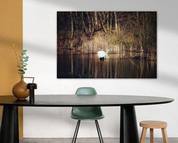 Dream of a swan van Shirley Douwstra