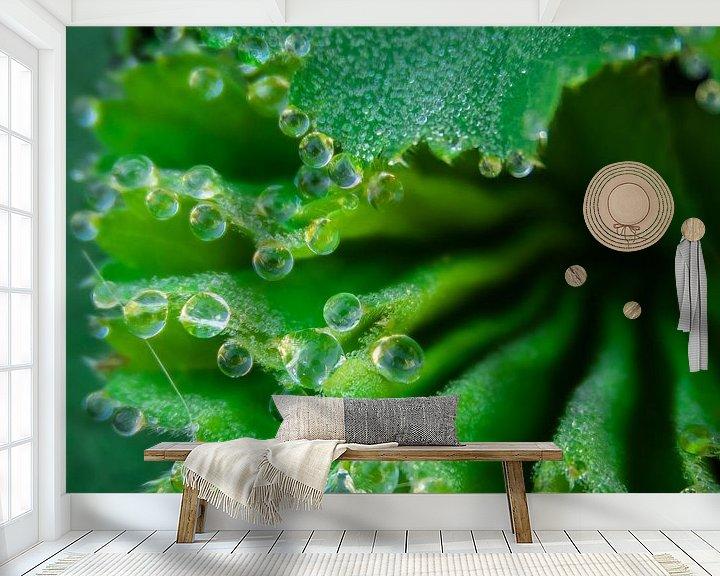 Sfeerimpressie behang: druppels op een plantje van Martijn Tilroe