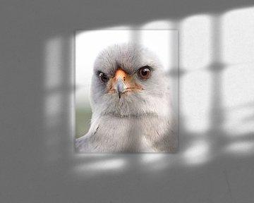 Singende Falke von Loek Lobel