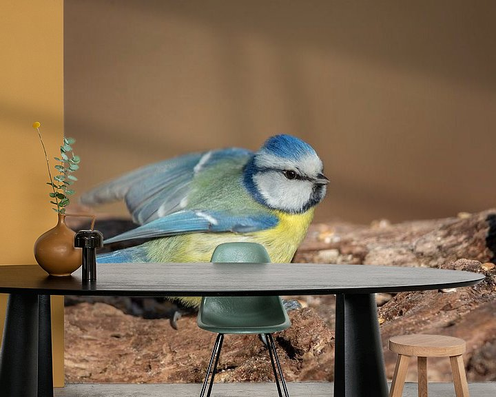 Impression: Mésange bleue (Cyanistes caeruleus) sur Dirk Rüter