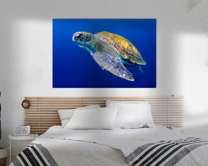 Sfeerimpressie: Groene zeeschildpad bij Tenerife van Filip Staes