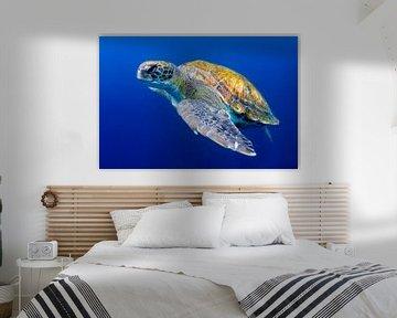 Groene zeeschildpad bij Tenerife van Filip Staes
