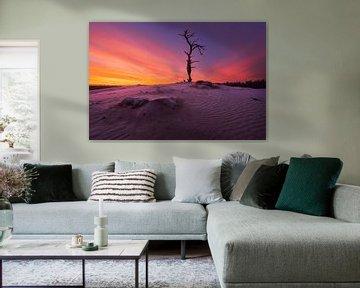 lever du soleil Veluwe sur Rick Kloekke